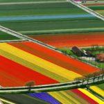 Поља лала - Холандија